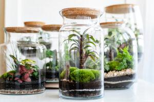 inspiracje prezentowe - ogrody w szkle