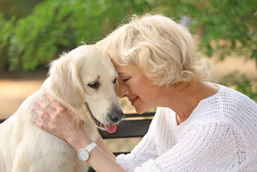 pies dla starszej osoby